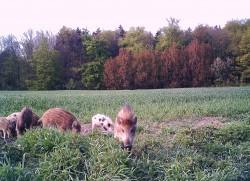 Jagen in Mecklenburg-Vorpommern